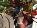 Therapeutic Horticulture Program Awarded UF Medical Guild Grant