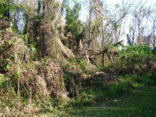 Wilmot Gardens in neglect