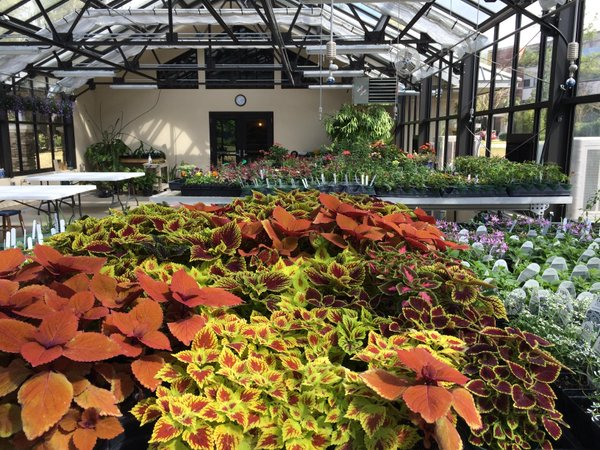 Wilmot Botanical Gardens greenhouse interior