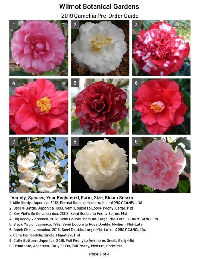 2019 Camellia Pre-Order Guide
