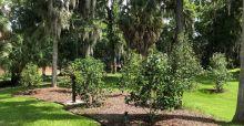 Gordy Garden
