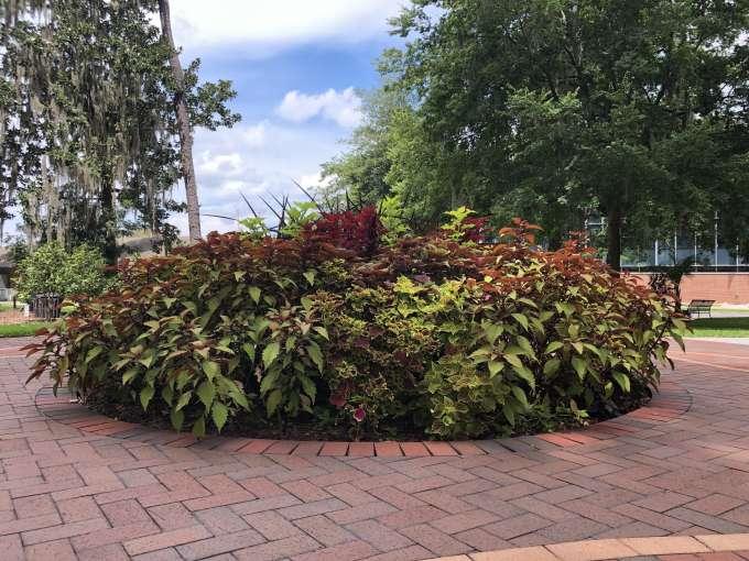 Wilmot Botanical Gardens Hub